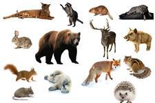Визуальный словарь на тему «Дикие животные»